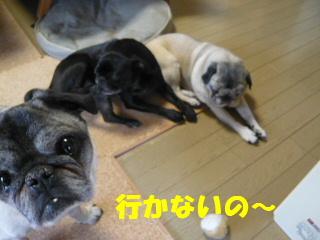 2009_0205yukinohi0004b.jpg