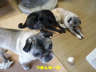 2009_0205yukinohi0005b.jpg
