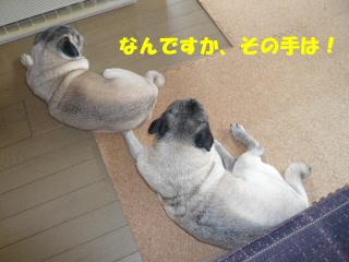 2009_0217wan0009b.jpg