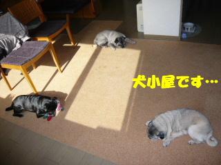 2009_0420toma0005b.jpg