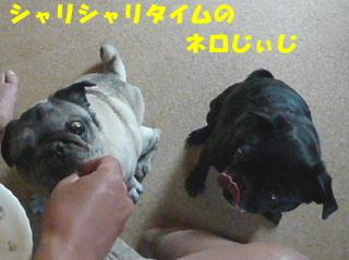 2009_0505musu0005b.jpg