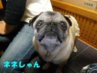 2009_0529kazuf0019b.jpg
