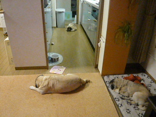 2009_0529kazuf0043.jpg
