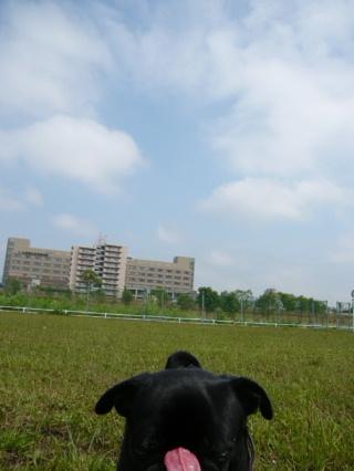 2009_0714kawa0013b.jpg