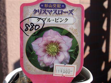 2008.1120新クリロー花_R