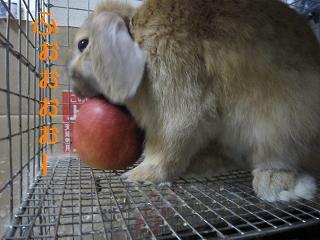 ばるごとリンゴ・・・