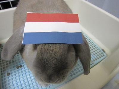 オランダ代表?