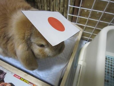 日本代表?