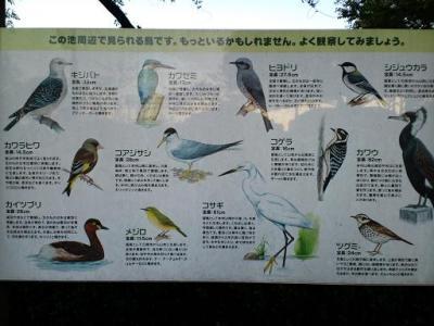 野鳥表・・・