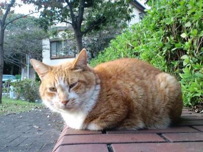 猫2・・・