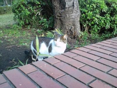 猫1・・・
