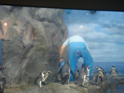 ペンギンのお食事タイム・・・