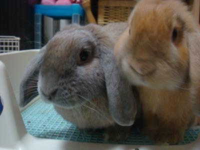 ウサギ・・・