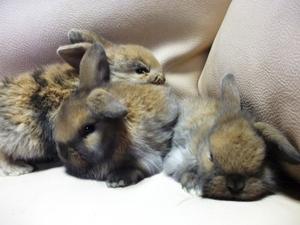 浜名湖の子ウサギ