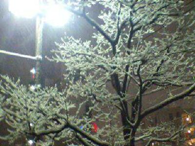 2011.02.14 雪景色
