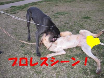 IMG_0402-p.jpg