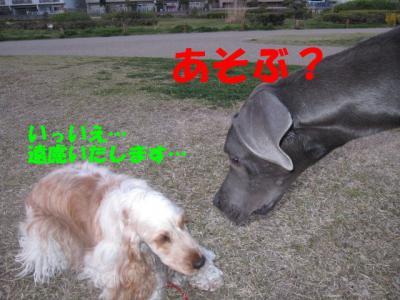 IMG_0410-p.jpg