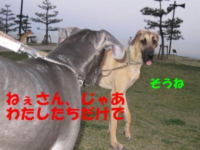 IMG_0412-p.jpg