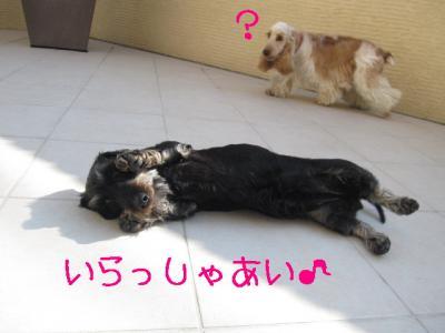 IMG_0505-p.jpg