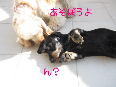 IMG_0507-p.jpg