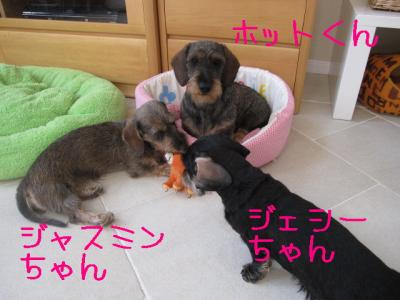 IMG_0521-p.jpg