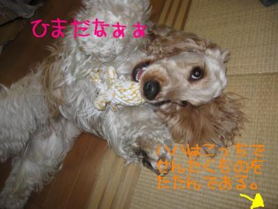 IMG_0524-p.jpg