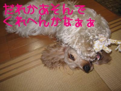 IMG_0526-p.jpg