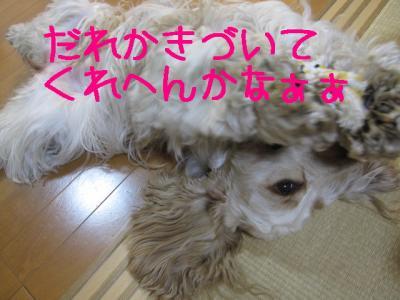 IMG_0528-p.jpg