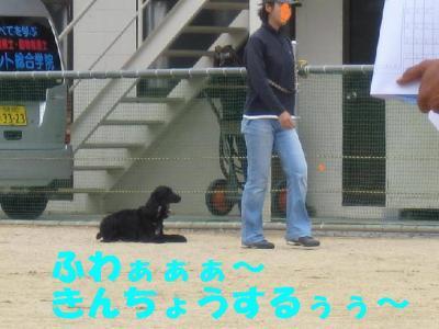 IMG_0900-p.jpg