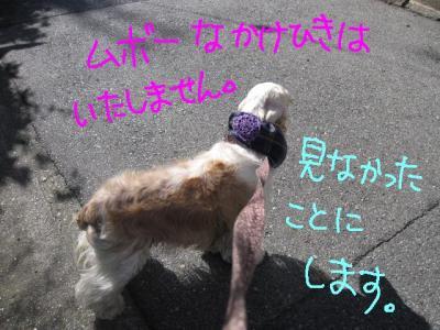 IMG_2163-p.jpg