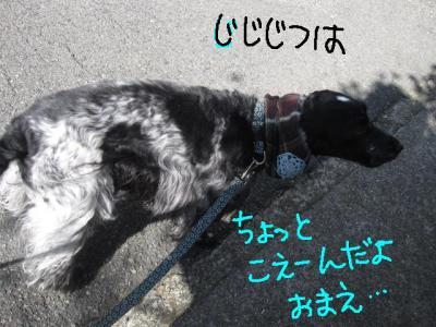 IMG_2164-p.jpg