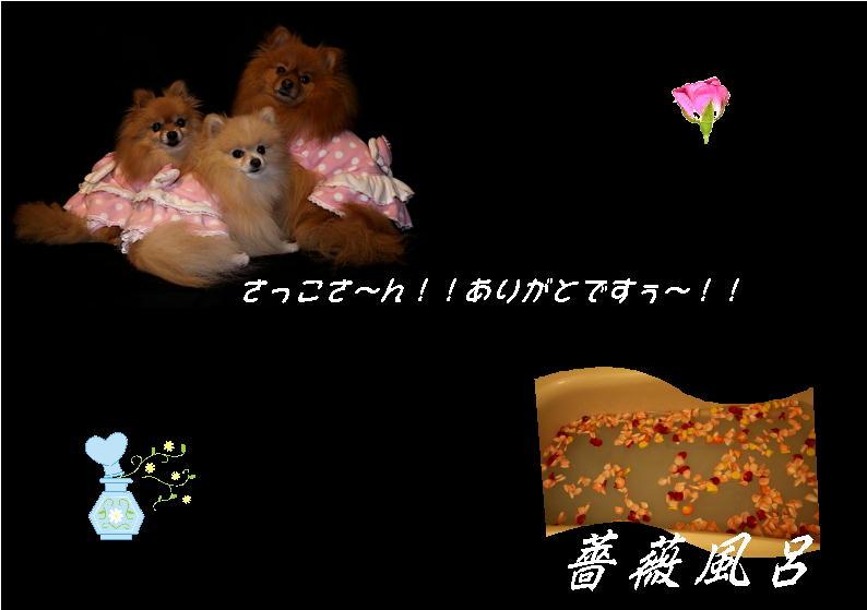 薔薇風呂2