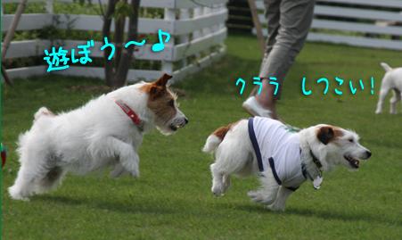 IMG_4271.jpg