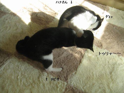 1IMG_3616.jpg