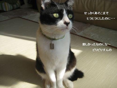 1IMG_3831.jpg