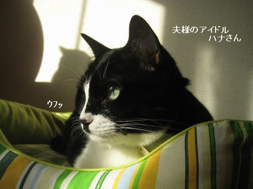 1IMG_3963.jpg