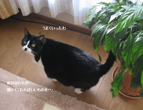 1IMG_4004.jpg