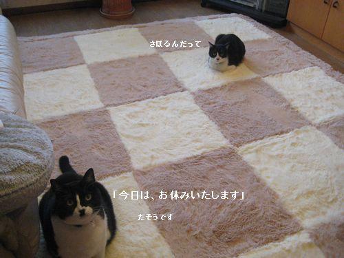2IMG_3223.jpg