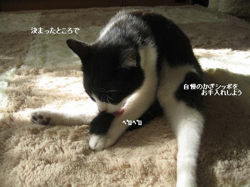 3IMG_3916.jpg