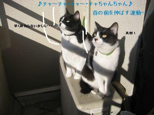 4IMG_3405.jpg