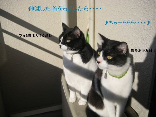 55IMG_3399.jpg