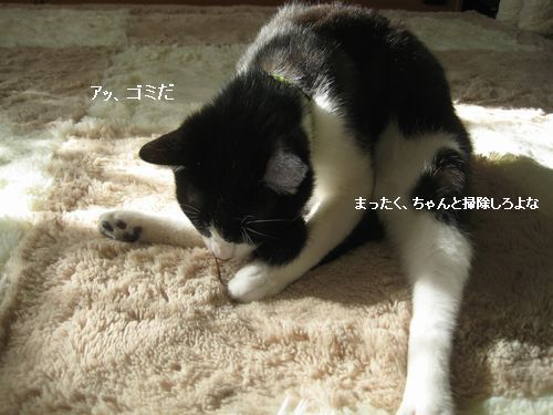 5IMG_3909.jpg