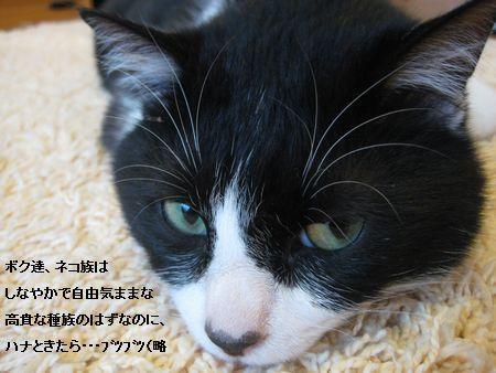6174IMG_5255.jpg