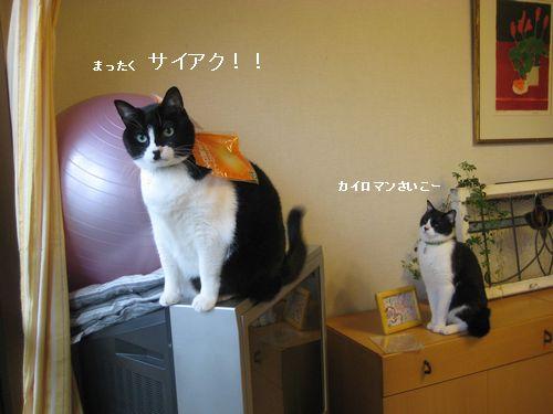 6IMG_4321.jpg