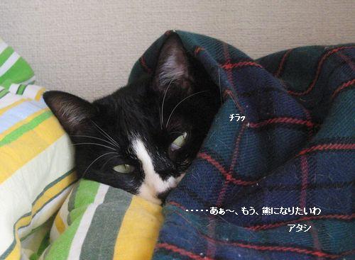 777IMG_3533.jpg