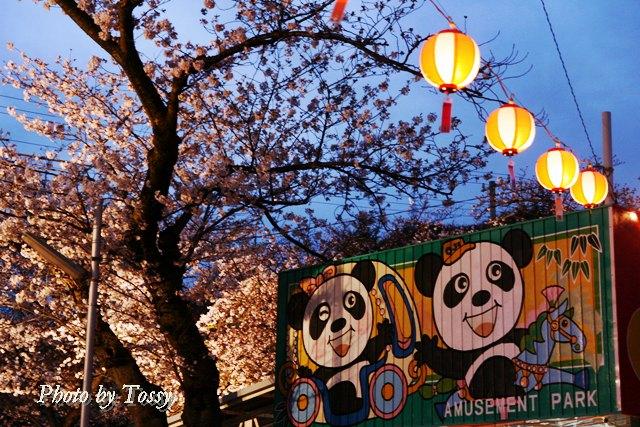 王子動物園夜桜1