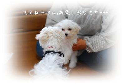 5_20091114190946.jpg