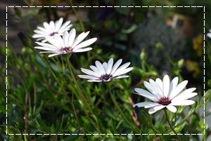 8_20100330152201.jpg
