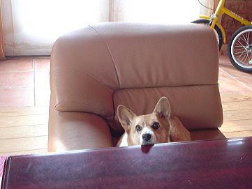 私の座るトコ♪