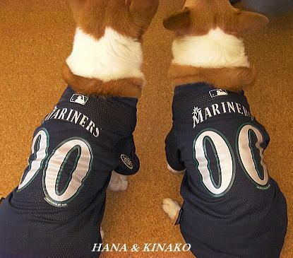マリナーズ犬♪